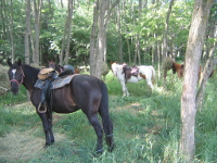 Outrider Horses at Camp