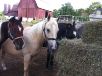 horses in the pasture at Outrider Horseback Riding