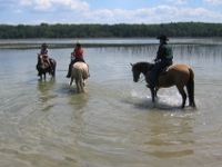 taking Outrider Horses for a walk in a lake in Northern Michigan